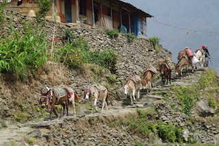 Drei Wochen Nepal im Herbst 2017