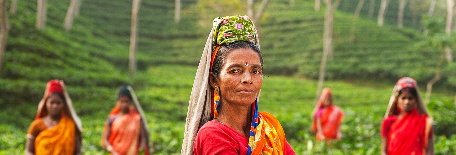 Exklusivreise auf den Spuren des Darjeeling unterwegs in Indien